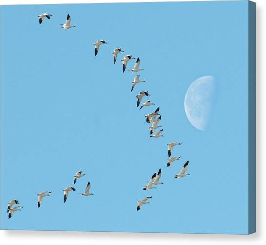 Past The Moon Canvas Print
