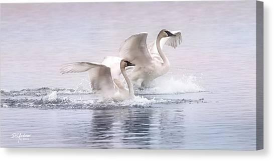 Pastel Swans Canvas Print