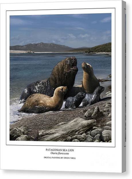 Patagonian Sea Lion Bull With Harem And Pups Canvas Print by Owen Bell