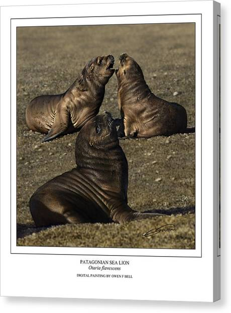 Patagonian Sea Lion Pups Canvas Print by Owen Bell