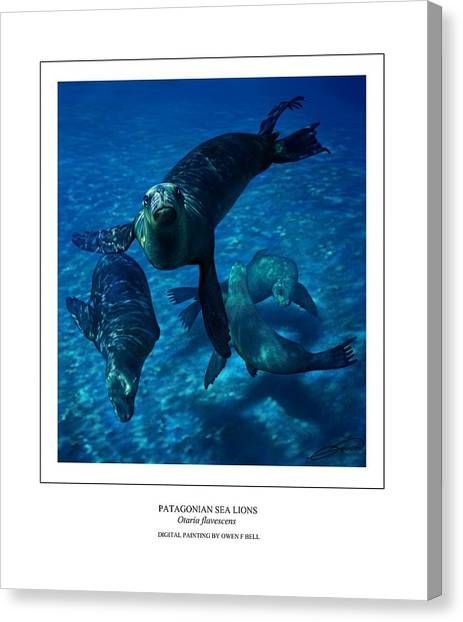 Patagonian Sea Lions Canvas Print by Owen Bell