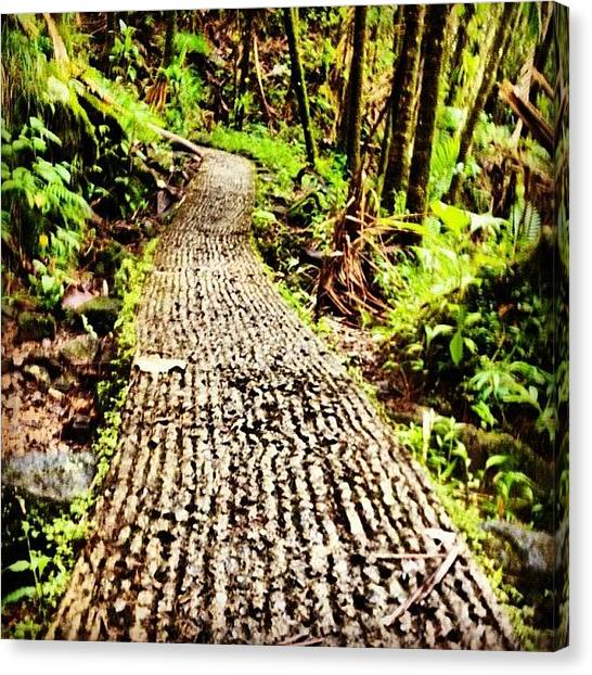 Rainforests Canvas Print - Path by Summer Cloud