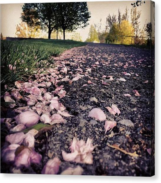 Pathway Canvas Print - Path To Heaven II #flowers #petals by Jess Gowan