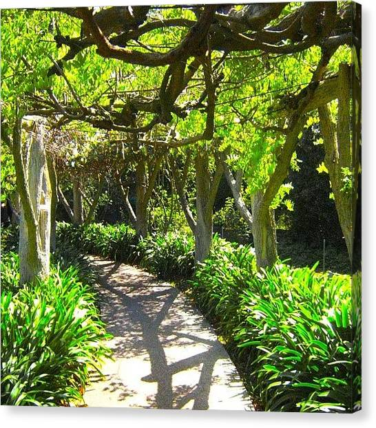 Arbor Canvas Print - Pathway #pathway #canopy #arbor by Mark Jackson