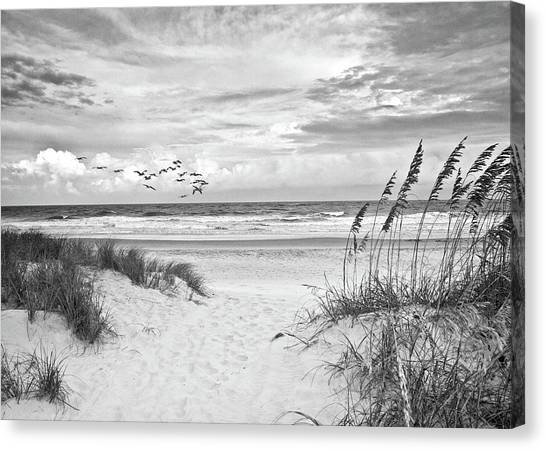 Pawleys Island - Pelican Flyway Canvas Print
