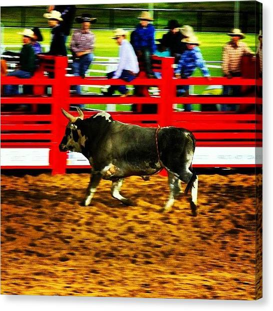 Rodeos Canvas Print - Pbr Beach N Bulls Classic At Stockland by Lana Houlihan