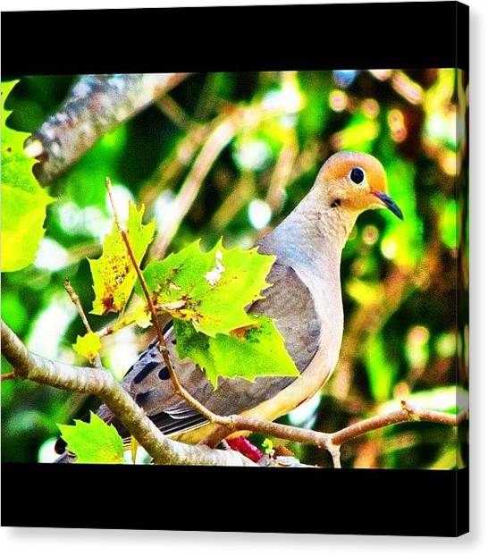 Dove Canvas Print - peace Be With You by Roger Snook