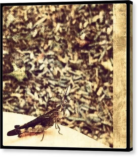Legs Canvas Print - Peaceful Grasshopper by Kristina Parker