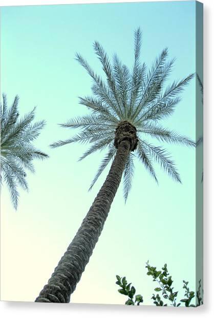 Peaceful Palms Canvas Print