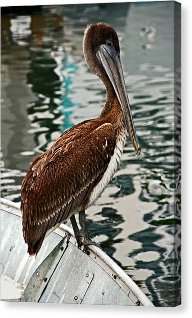 Canvas Print - Peaceful Pelican Place by Donna Pagakis