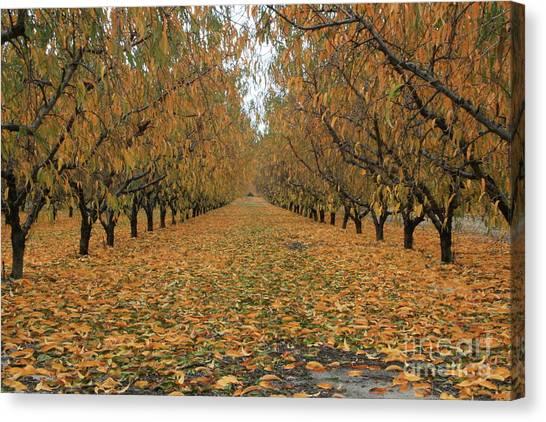 Peach Leaves Canvas Print