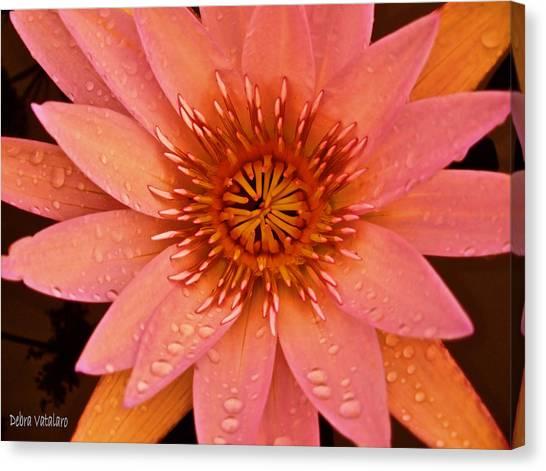 Peach Raindrop Bloom Canvas Print by Debra     Vatalaro