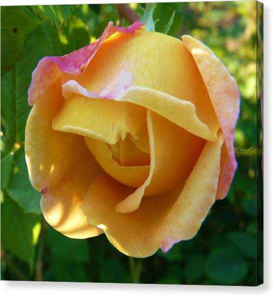 Peach Rose Canvas Print by Jeanette Oberholtzer