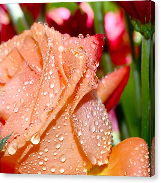 Peach Rose Canvas Print by Michelle Armstrong