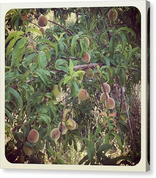 Jungles Canvas Print - Peach Tree by Sian Holt