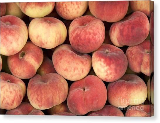Doughnut Canvas Print - Peaches by Jane Rix