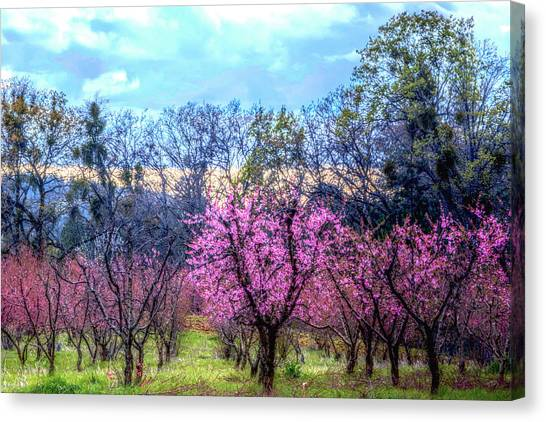 Canvas Print featuring the photograph Peachy Blossum Scene2 by William Havle