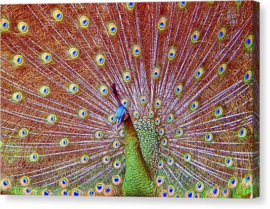 Peacock Bloom Canvas Print