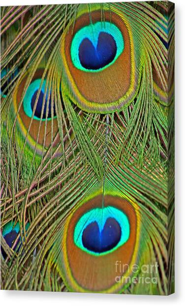 Peacock Feather 2 Canvas Print