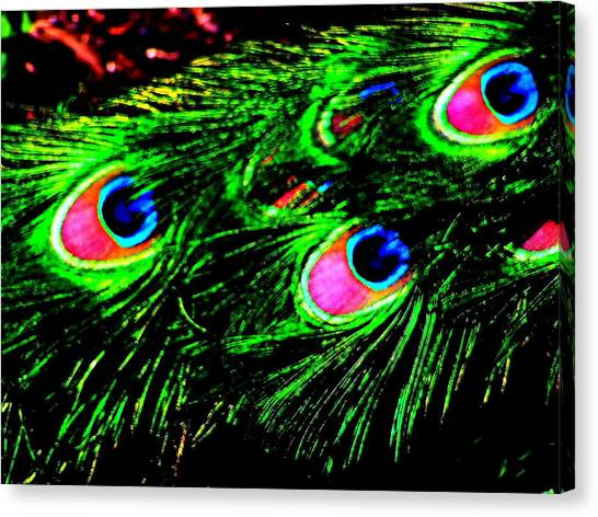 Peacock With Flare Canvas Print