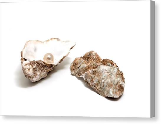 Pearl In Shell Canvas Print by Ursula Alter