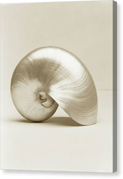 Pearlised Nautilus Sea Shell, Close-up Canvas Print by Finn Fox