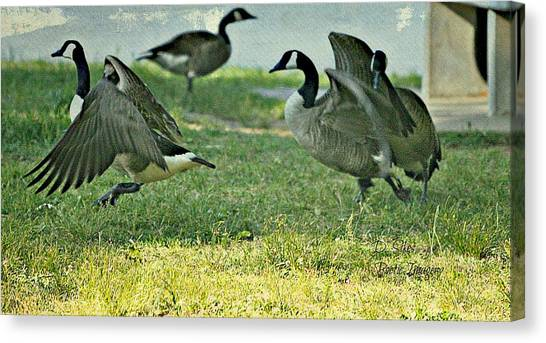 Pecking Order Canvas Print by Debbie Sikes