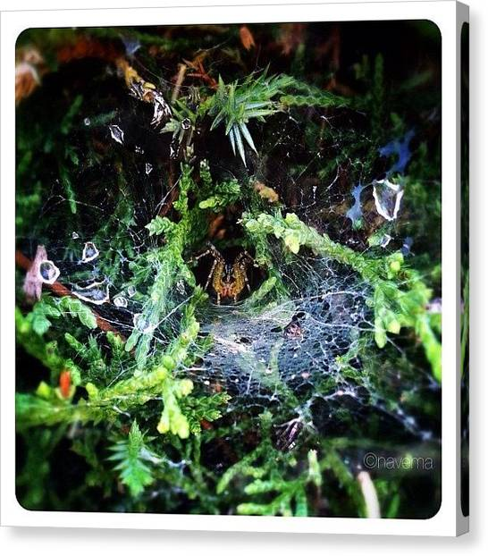 Spiders Canvas Print - Peek-a-boo by Natasha Marco