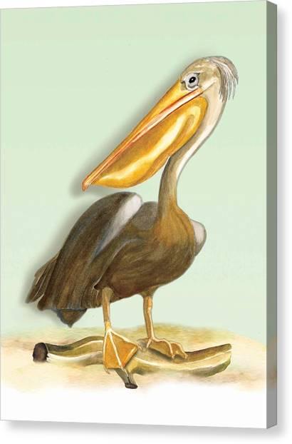 Pelican Bill Canvas Print