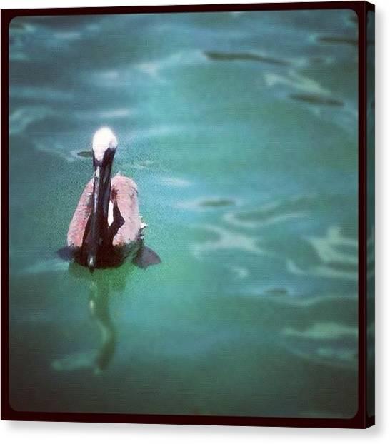 Ocean Animals Canvas Print - Pelican by Dustin Goolsby