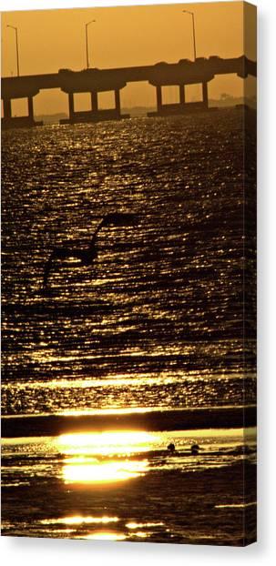 Pelican In Flight Golden Sun Canvas Print by John Wright