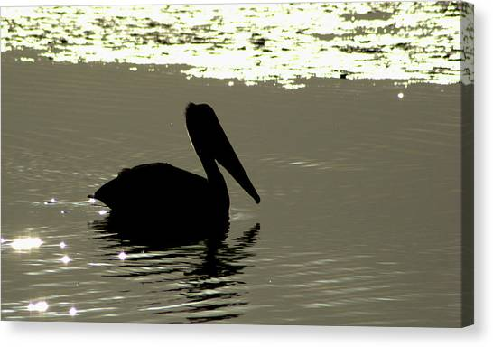 Pelican In Silioutte Canvas Print by John Wright