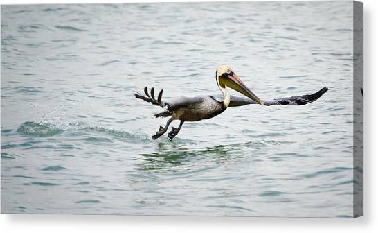 Pelican Landing Canvas Print by Mike Rivera