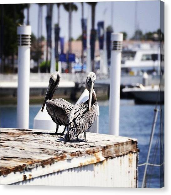Marinas Canvas Print - Pelican Pair by S Michelle Reese
