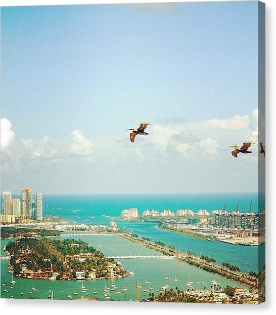 Large Birds Canvas Print - Pelicans Above Biscayne Bay by Joel Lopez
