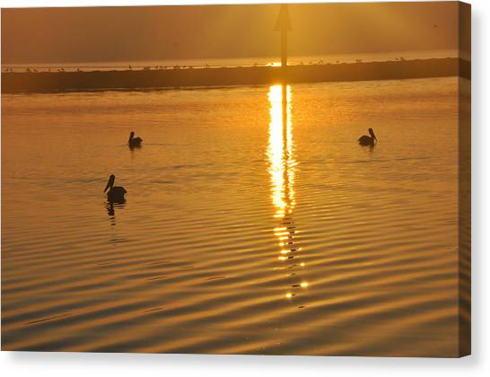 Pelicans And Sunrise Canvas Print