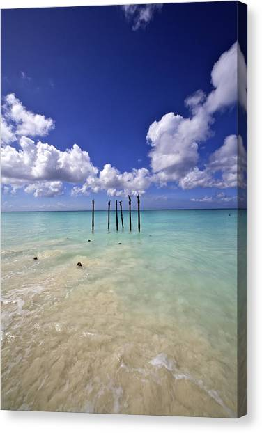 Pelicans Of Sunny Aruba Canvas Print