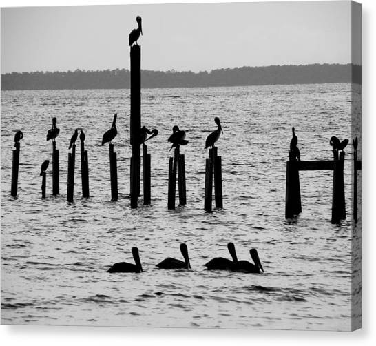 Pelicans On Posts Canvas Print by Judy Wanamaker