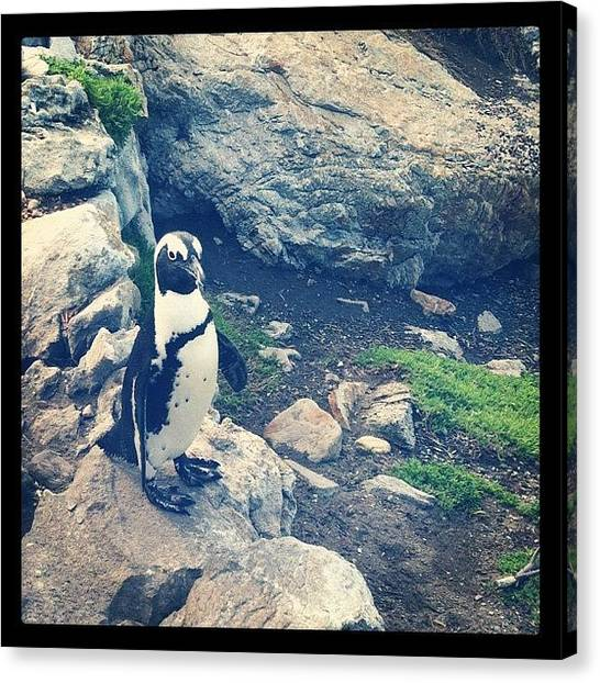 Penguins Canvas Print - Penguin! Lovely @@ by Zachary Voo