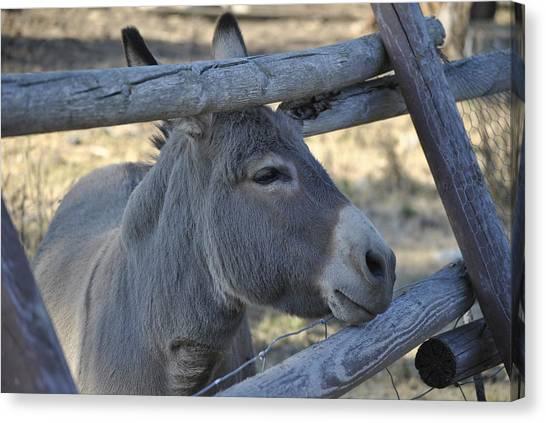 Pensive Donkey Canvas Print