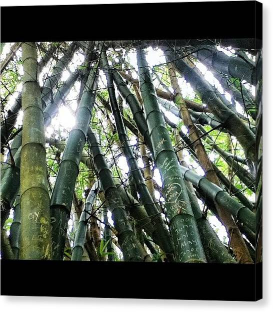 Bamboo Canvas Print - People wrote On These Bamboos by Brookiee 