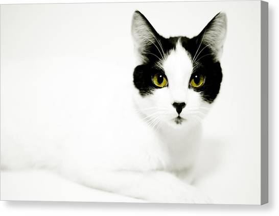 Pepper Canvas Print