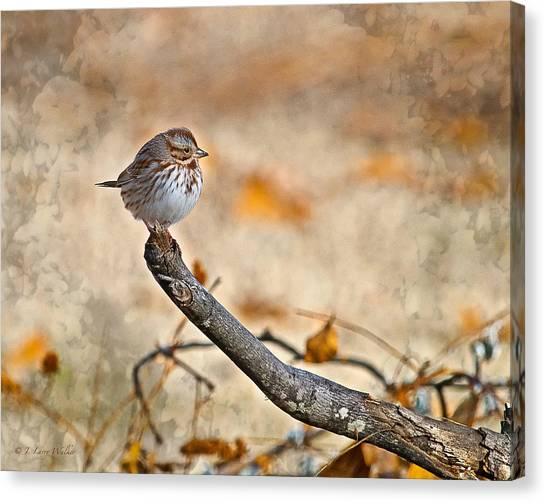 Perched High - Baby Sparrow Canvas Print