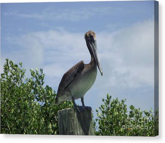 Perched Pelican Canvas Print
