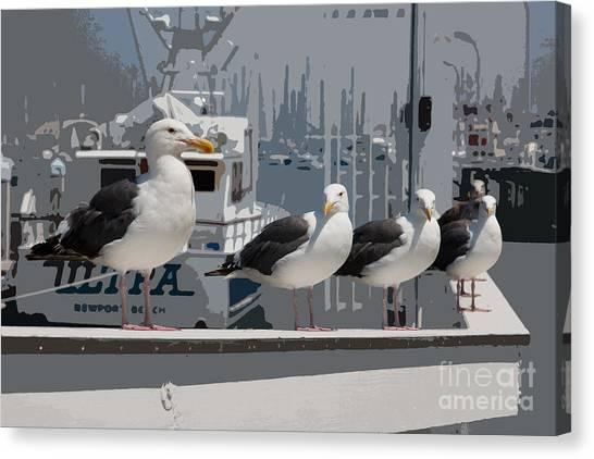 Perched Seagulls Canvas Print