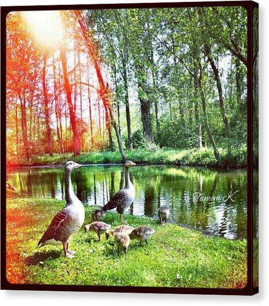 Environment Canvas Print - Perfect Family #duck #river #tree by K H   U   R   A   M
