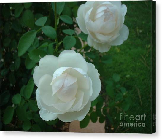 Perfect Pair Canvas Print