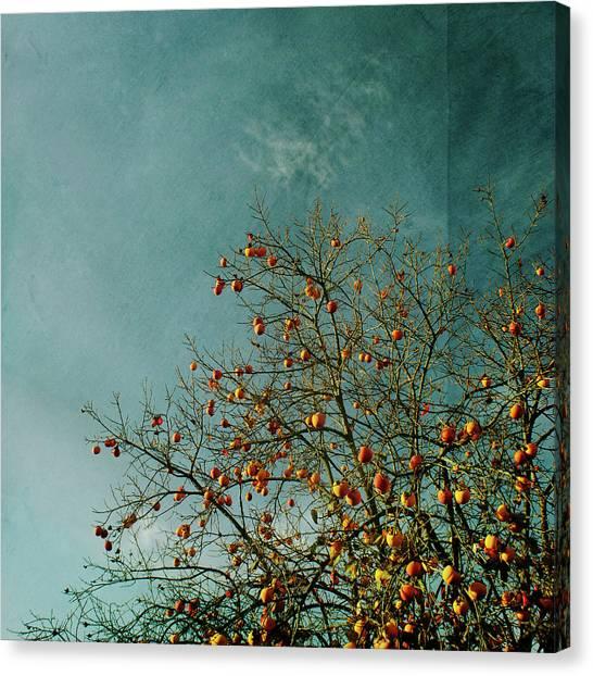 Persimmon Canvas Print - Persimmon B O U N T Y by Paul Grand Image