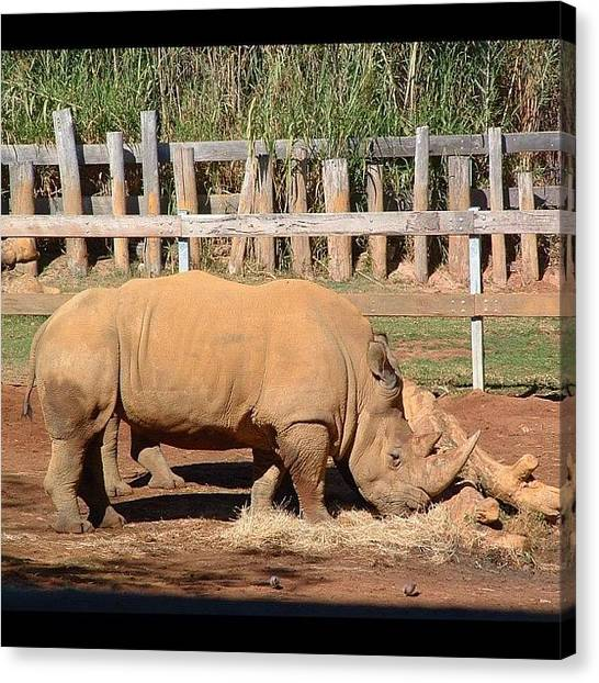 Rhinos Canvas Print - #perth #zoo #rhino #westernaustralia by Kristie Brown