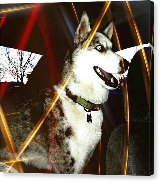 Wolves Canvas Print - #petsagram #instapet #igdaily by Krystalynn Moore